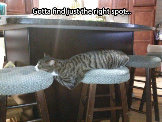 Just the right spot…