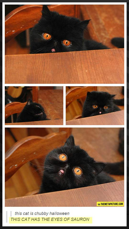 funny-cat-cite-eyes-Sauron