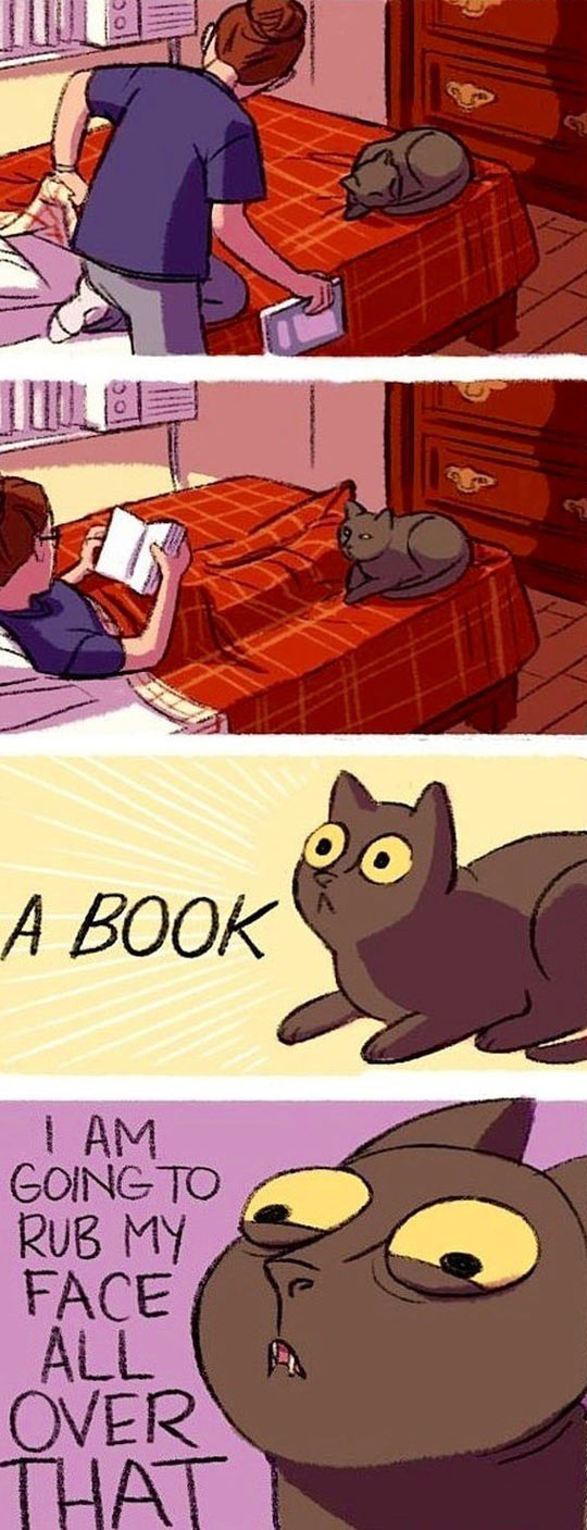 My cat when I'm trying to read…