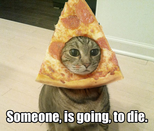 funny-cat-pizza-head-angry