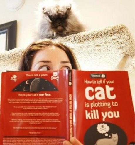 How to tell if your cat is on to something…