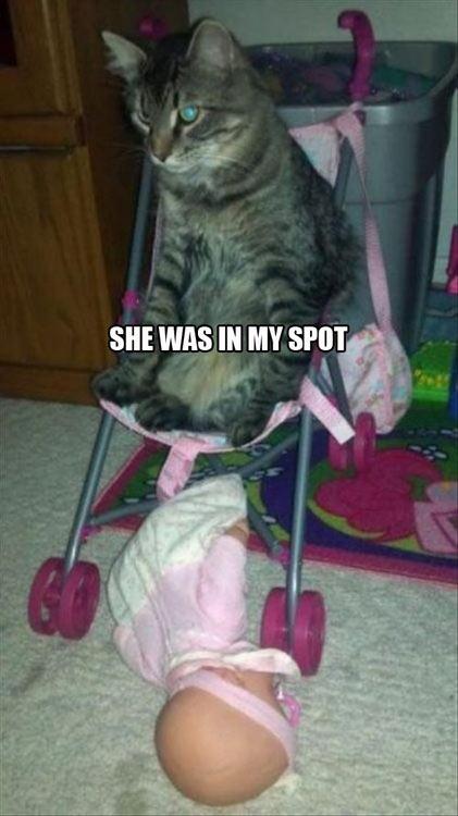 Sheldon cat…