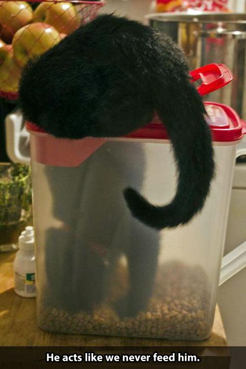 funny-cat-seeking-food