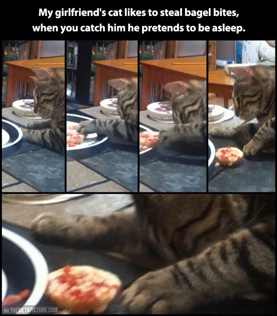 funny-cat-sleep-steal-food