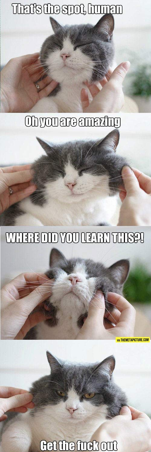 Cat behavior in a nutshell…
