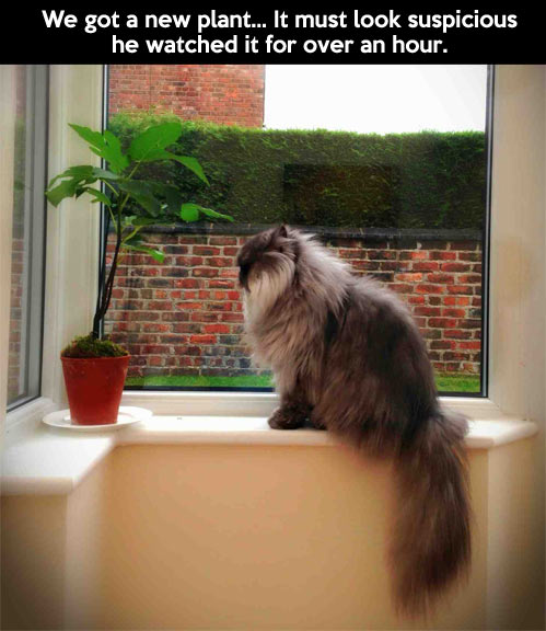 funny-cat-watching-plant