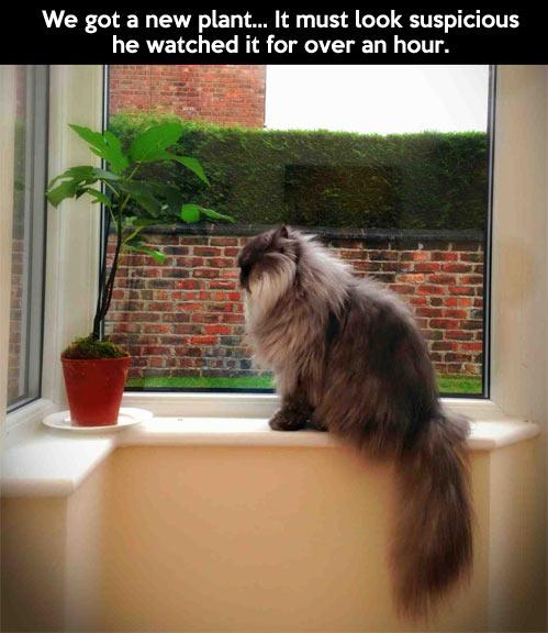 Suspicious plant…