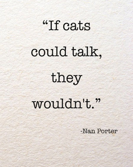 If cats could actually talk…