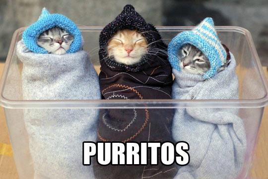 funny-cats-warm-happy-cute