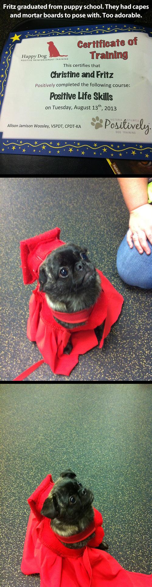 funny-certificate-training-dog-graduation