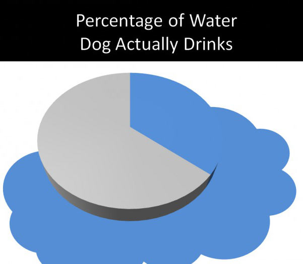 Amount of water my dog actually drinks…