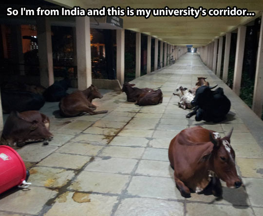 Colleges in India…