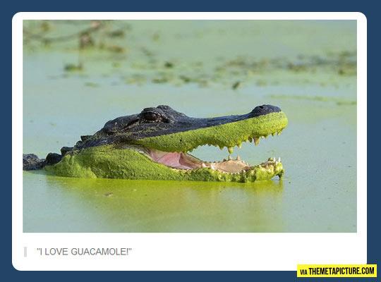 I love guacamole…