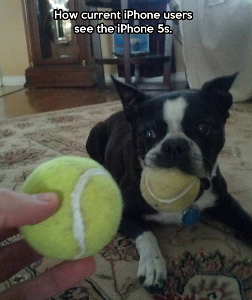 When iPhone users see a new iPhone…