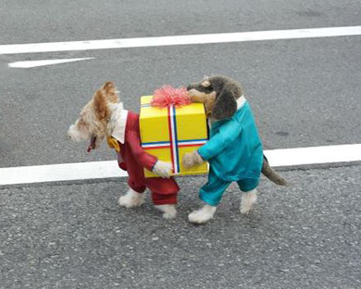 I wish I was a dog just so I could wear this costume…
