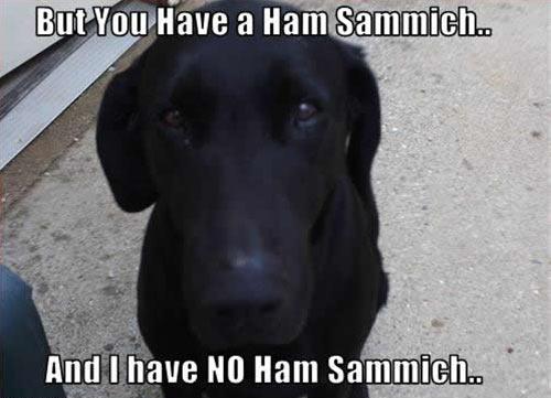 Share the sammich…