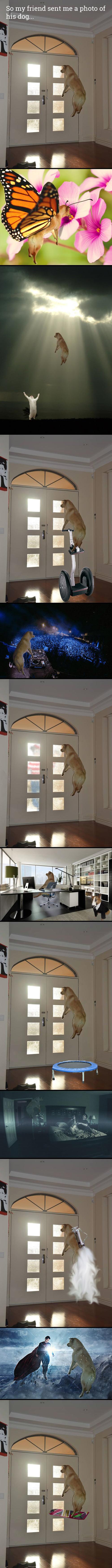 funny-dog-jump-Photoshop