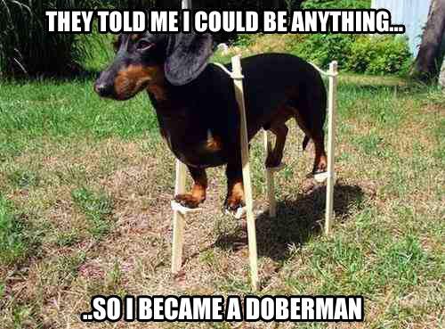 funny-dog-little-Doberman-change