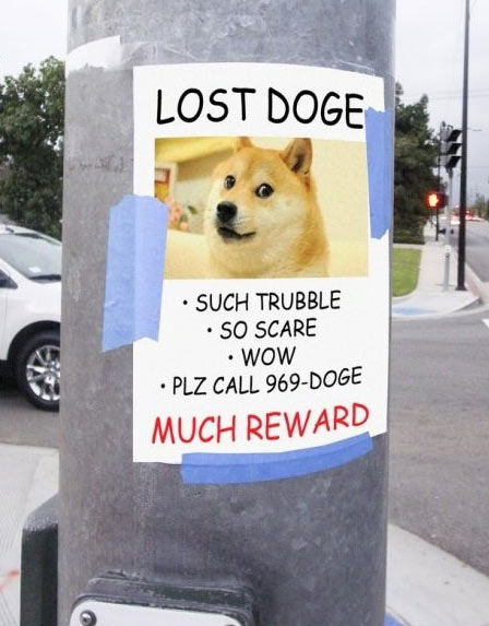Lost Doge…