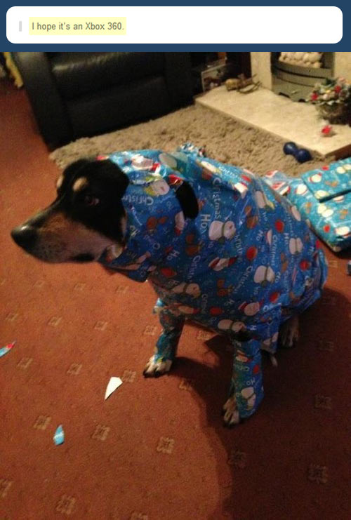 I really hope it's an Xbox…