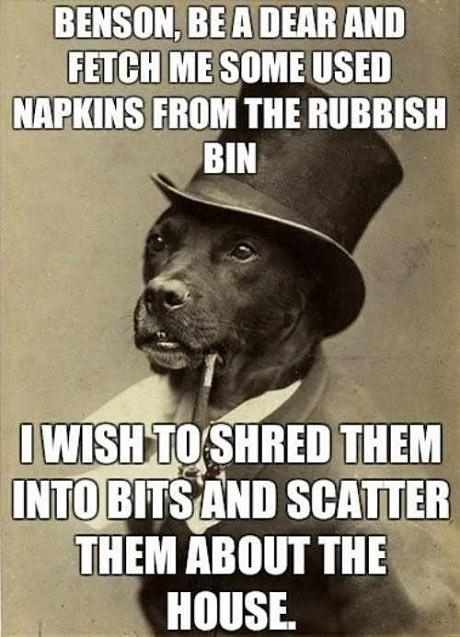 funny-dog-sir-rubbish-old-photo