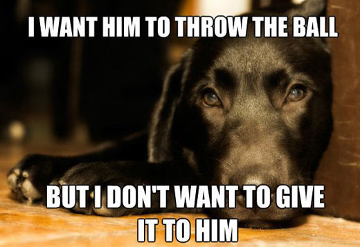 Every dog's logic…