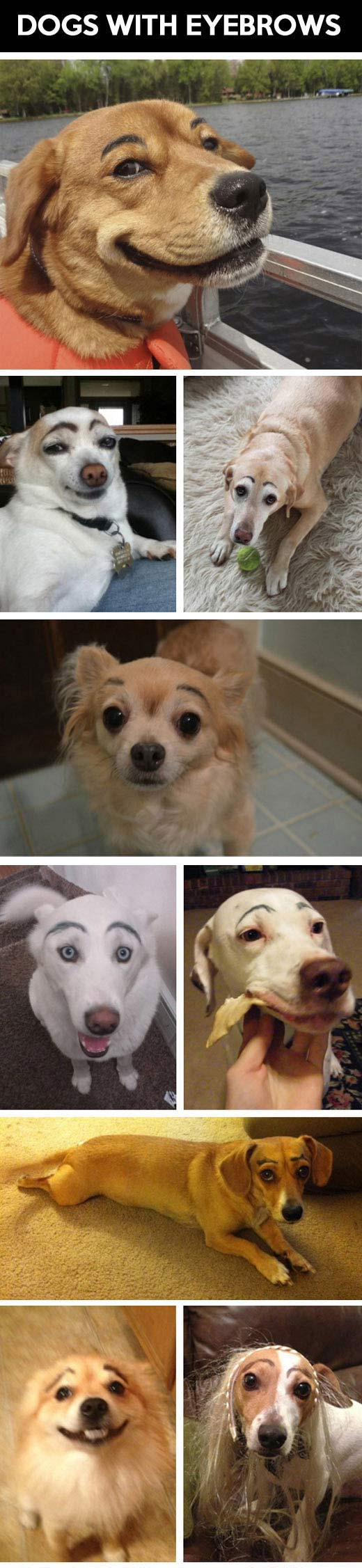 Dogs with eyebrows...