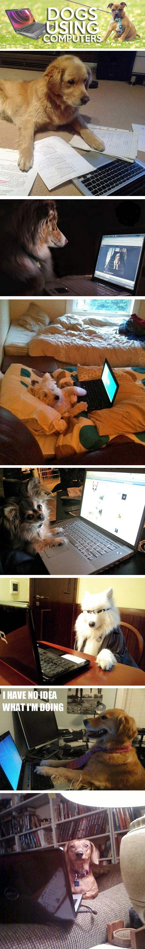Dogs using computers...