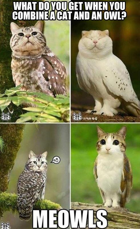 funny-evolution-cat-owl