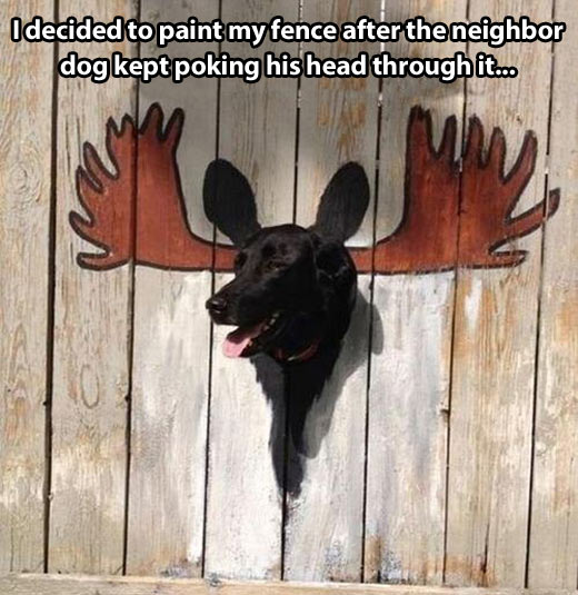 funny-fence-dog-painted