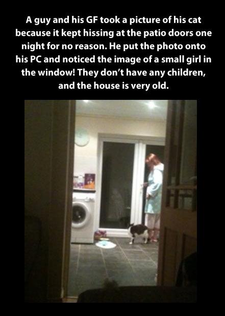funny-ghost-girl-window-cat