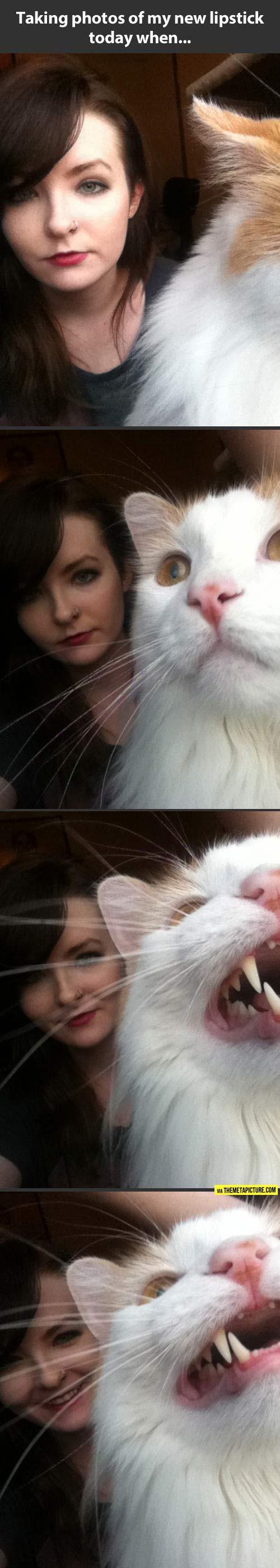 Unexpected feline companion photobomb…