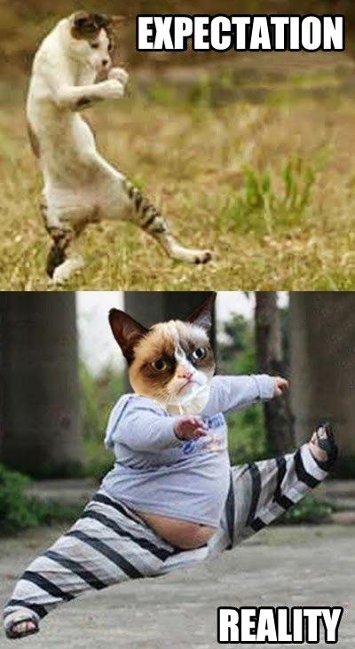 funny-grumpy-cat-running-fat
