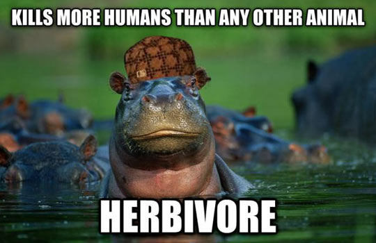 Scumbag Hippo…