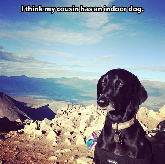 Disinterested dog…