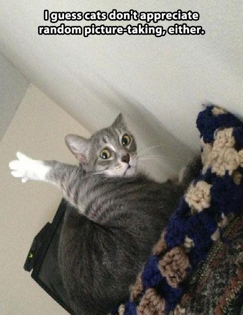 funny-kitten-cat-leg-weird-face