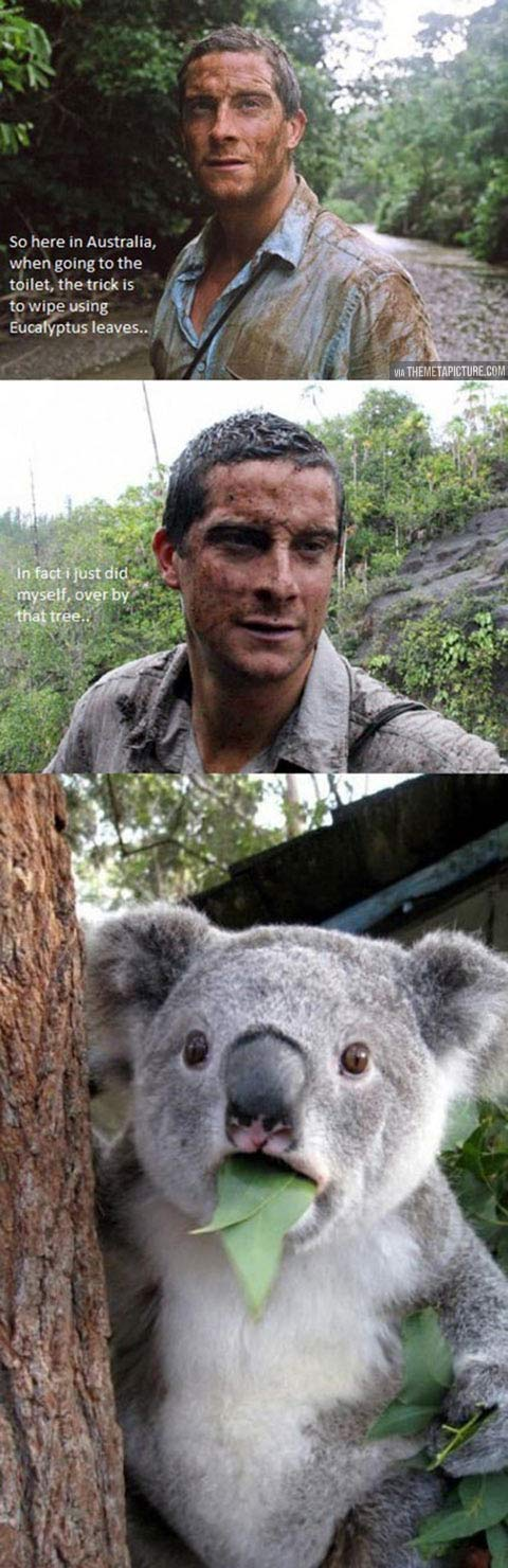 Bear Grylls takes it a little too far…