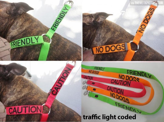 Traffic light coded leashes…