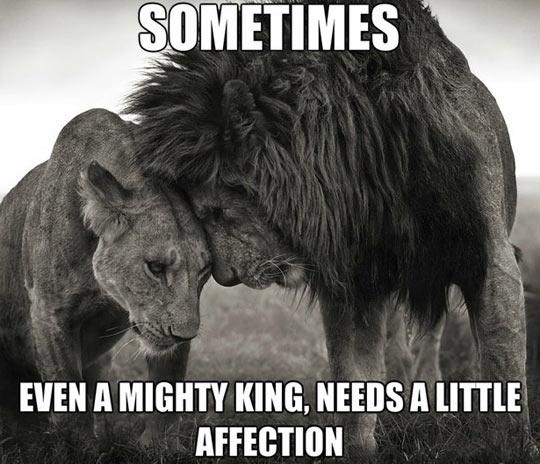 funny-lion-little-affection