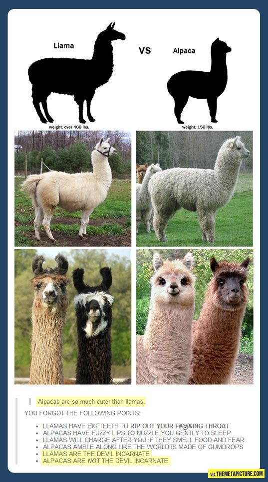 funny-llama-alpaca-cute-devil
