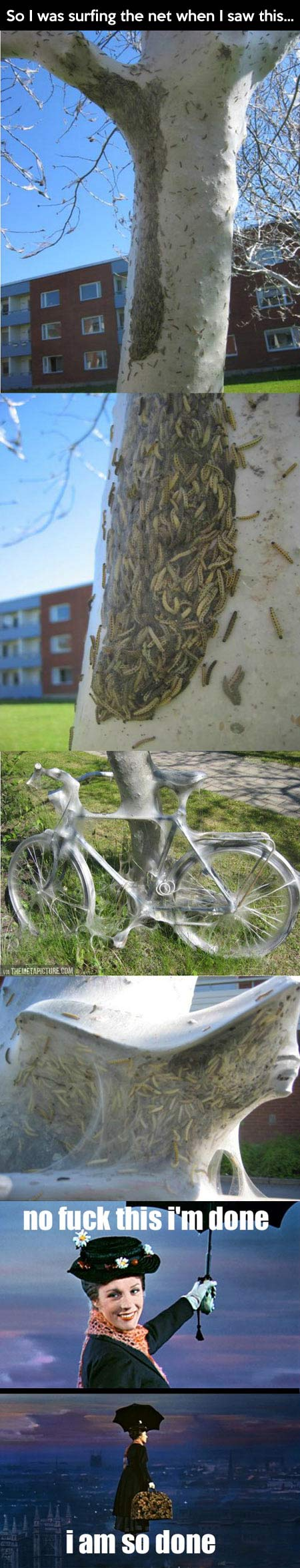 funny-nature-worms-tree-bike