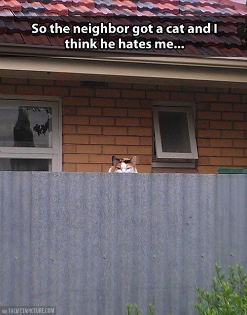 Neighborly cat…