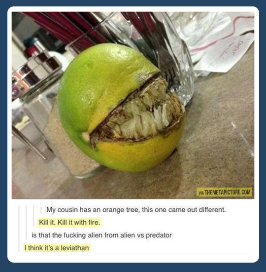 funny-orange-Alien-Predator-teeth