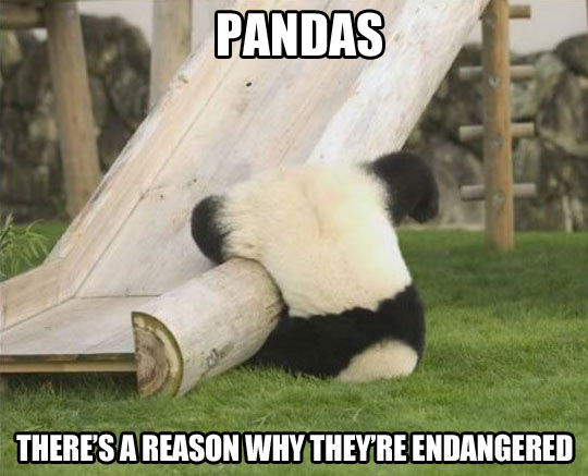 Pics Photos - Quotes And Pandas