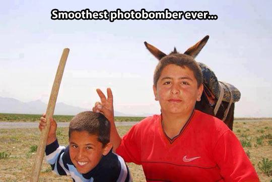 funny-photobomb-donkey-kids