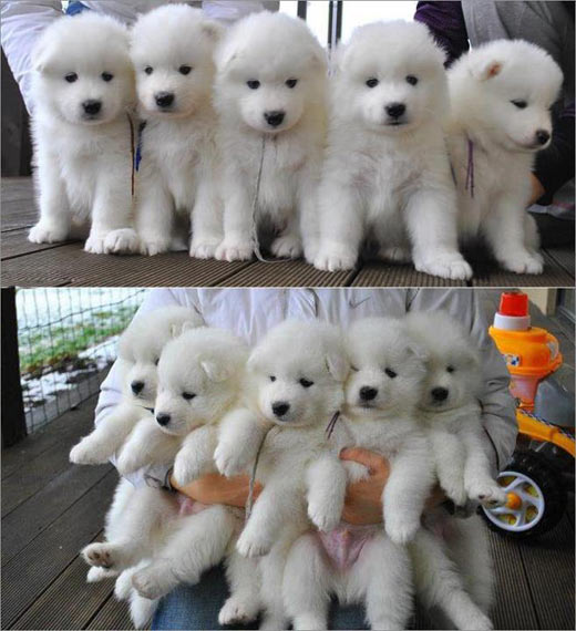 Bad day? Here, have some fluffy puppies…