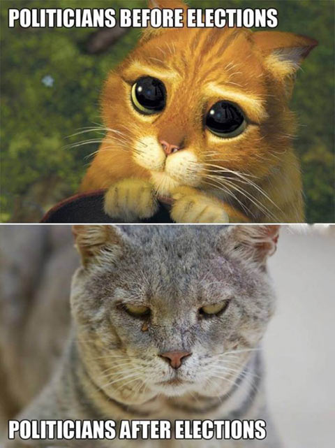 funny-politicians-before-elections-cat-Shrek