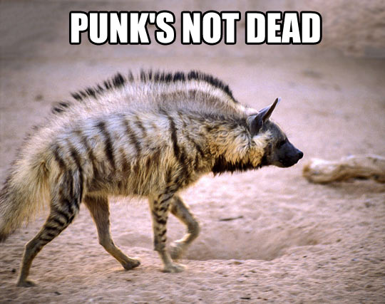 funny-punk-hyena-hair