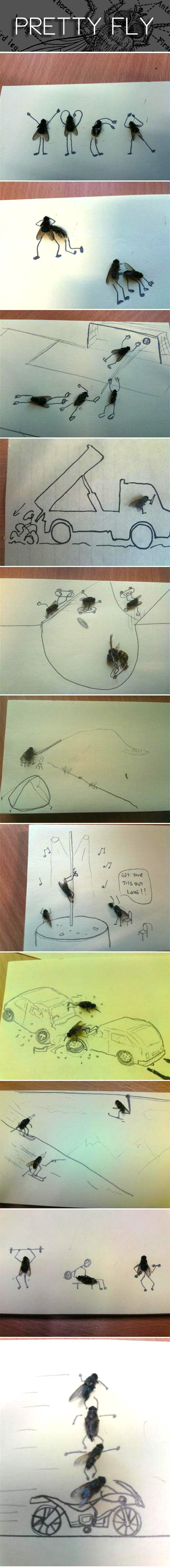 funny-real-fly-drawing