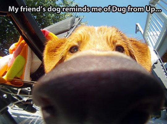 funny-real-life-dog-Up